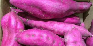 Mashed purple sweet potato recipe, Calories and Health Benefits