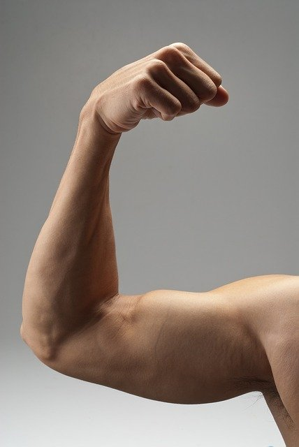 How to stretch biceps