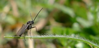 How to get rid of fungus gnats outside