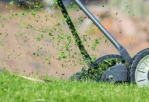 Top Best Lawn Fertilizer For Green grass in summer