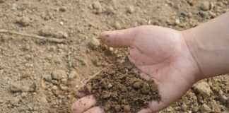 How To Apply Fertilizers To Your Lawn: 7 Easy Steps