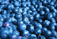 Are blueberries considered berries?
