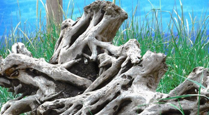 What is the best way to boil driftwood?